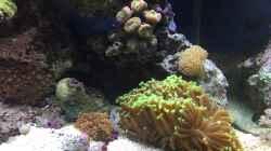 Aquarium re. Seite