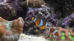 Besatz im Aquarium Fluval M90