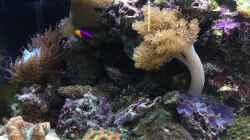 Aquarium li. Seite