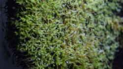 Xaxim-Platten begrünen langsam mit Moos