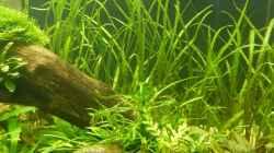 Pflanzen im Aquarium Wohnzimmerteiler