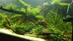 Aquarium Wohnzimmerteiler