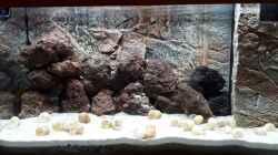Aquarium Tanganjika 125