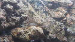 Besatz im Aquarium Tanganjika 125