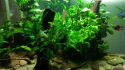 Aquarium Blue Dempsey