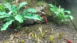 Besatz im Aquarium Nano 30