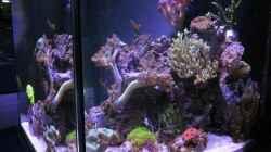 Aquarium 80L Nano Riff