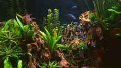 Dekoration im Aquarium Juwel Lido 200