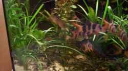 Pflanzen im Aquarium Heimat in 6 Ecken (nur noch als Beispiel)