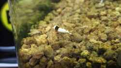Besatz im Aquarium Becken 3497