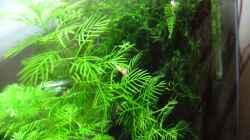 Pflanzen im Aquarium Becken 3497
