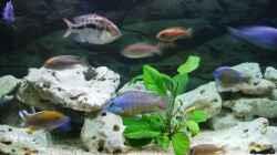 Aquarium Becken 35