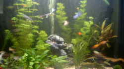 Dekoration im Aquarium Becken 3504