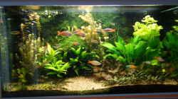 Aquarium Regenbogenfische