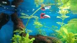 Besatz im Aquarium Papilis Anfängerbecken