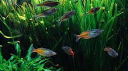 Besatz im Aquarium Becken 3588
