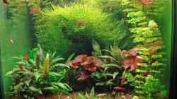 Aquarium Becken 3630