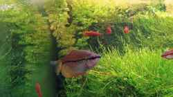 Besatz im Aquarium Becken 3630