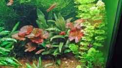 Pflanzen im Aquarium Becken 3630