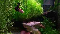 Aquarium Bettas Home 2