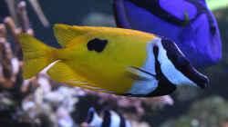 Besatz im Aquarium Riff XXL