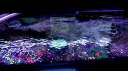 Aquarium Riff XXL