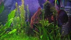 Dekoration im Aquarium Becken 3721