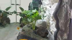 Aquarium Tanganjika Becken