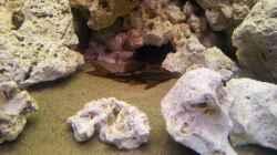 Besatz im Aquarium Juwel Trigon 350 Eck Aq