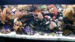 Aquarium Becken 3782