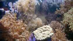 Pflanzen im Aquarium Becken 3782