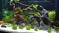 Dekoration im Aquarium Aquarium