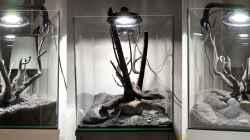 Pflanzen im Aquarium Kleiner Kubus (DENNERLE 60er)