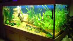 Aquarium Aufgelöst