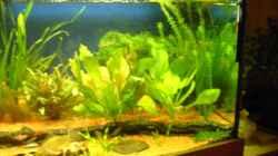 Pflanzen im Aquarium Aufgelöst