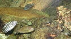 Besatz im Aquarium Becken 3836