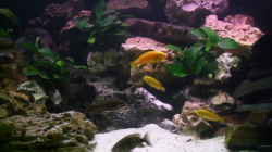 Dekoration im Aquarium Becken 3874