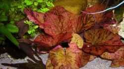 Pflanzen im Aquarium Becken 3909