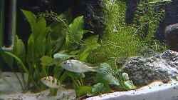 Pflanzen im Aquarium Becken 395