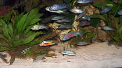 Aquarium Becken 395