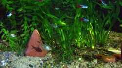 Aquarium Becken 4018