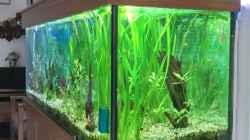 Pflanzen im Aquarium Becken 4018