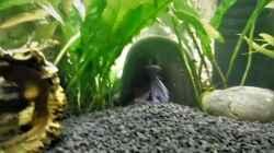 Dekoration im Aquarium mein kleines Betta Becken