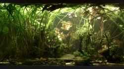 Aquarium Schlaftraum