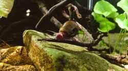 Besatz im Aquarium Schlaftraum