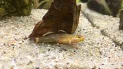 Besatz im Aquarium Kleine Geröllhalde