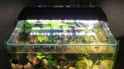Aquarium Kleine Geröllhalde