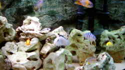 Dekoration im Aquarium Becken 415