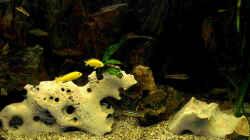 Aquarium Becken 42