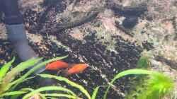 Hanni und Nanni sind eben vom Quarantäne Becken eingezogen. Sind aus ungewollt er